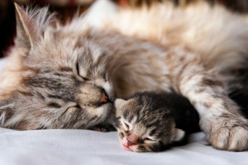 Рождение котят и уход за ними