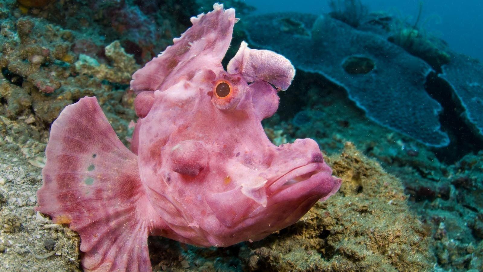 Рыба-скорпион Эшмейера