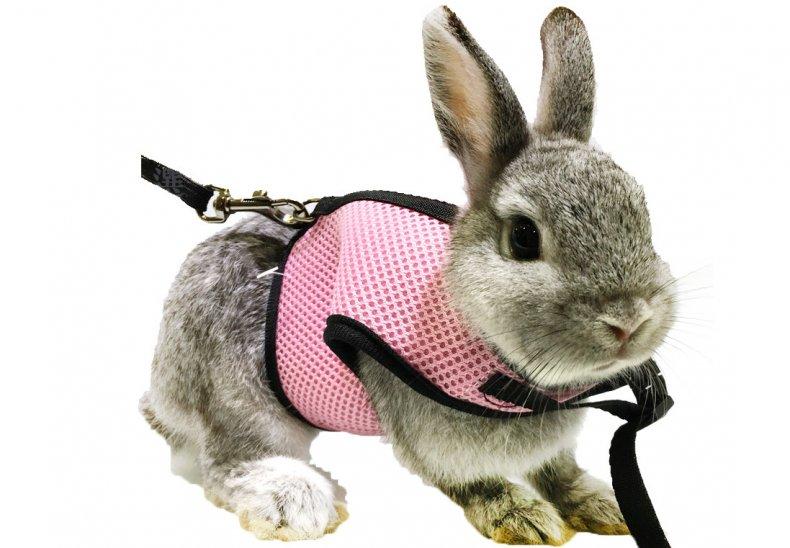 Шлейки для кроликов — как правильно выбрать и приучить питомца