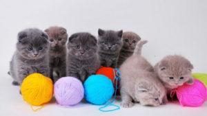 Сделайте игрушки для котов своими руками!