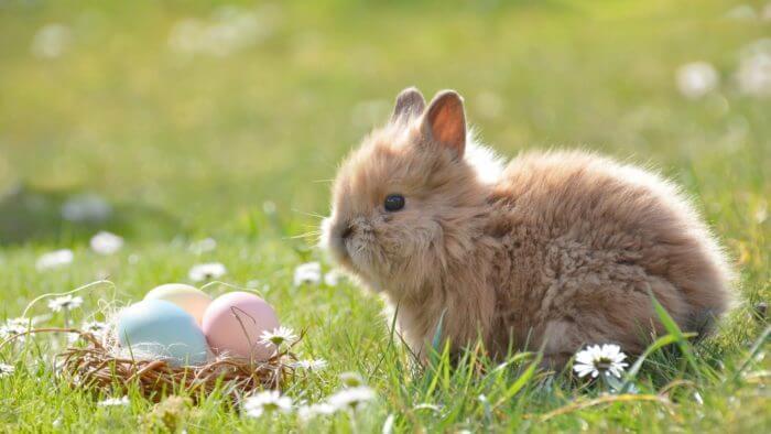 Содержание декоративных кроликов, отзывы хозяев