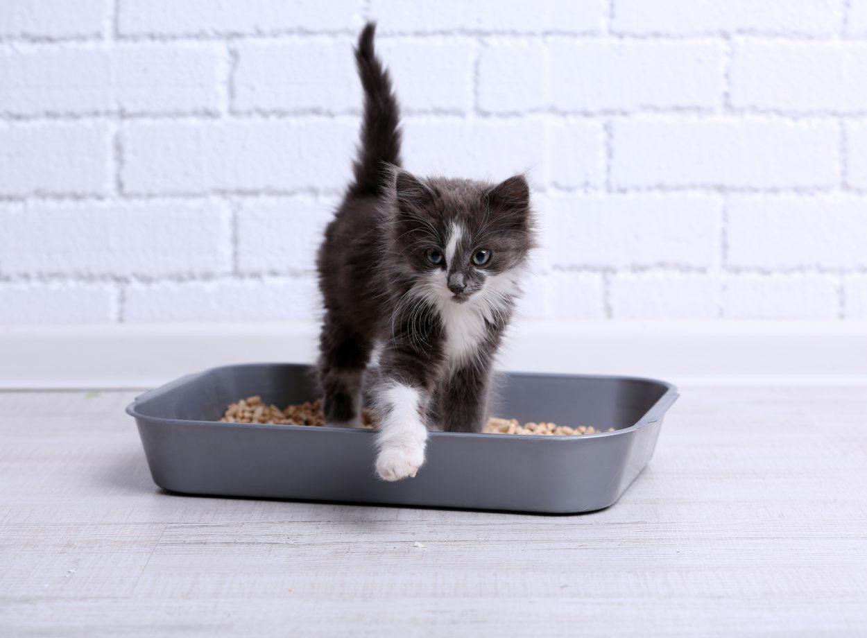 Способы и советы тем, кто хочет приручить котенка к лотку