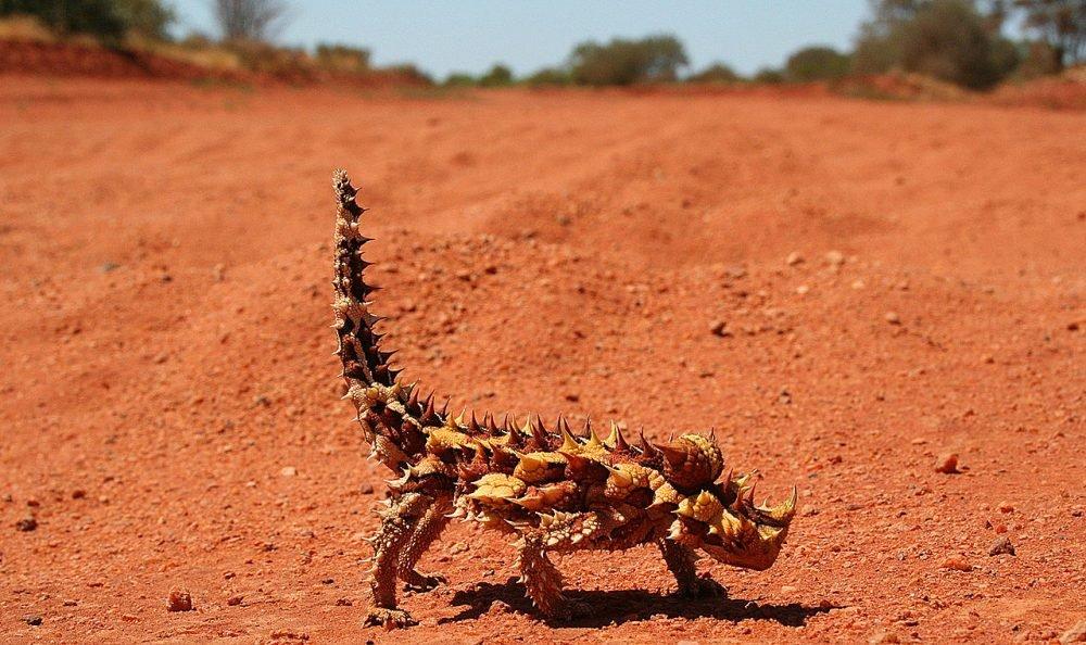 Выносливые растения и интересные животные пустыни
