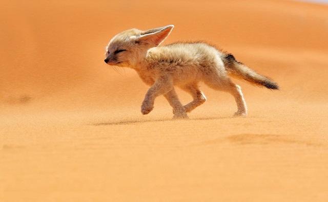 Животные-обитатели пустынь и полупустынь