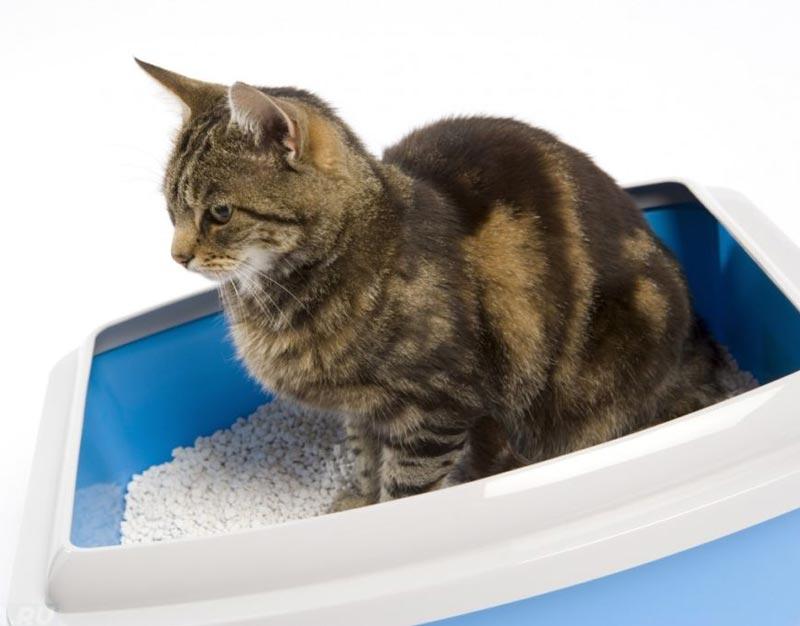 Запор у котёнка: что можно использовать в качестве слабительного