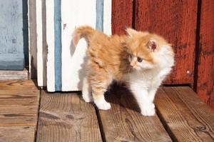 Как и чем кормить недельного котенка: особенности ухода