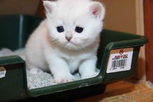 Когда нужно делать первую прививку котёнку