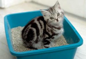 Почему все кошки любят валерьянку