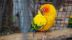 оранжевый попугай в клетке