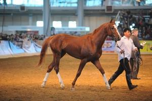 Сколько стоит лошадь в наше время, самые дорогие скакуны
