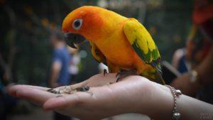 попугай ест с рук