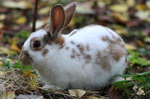 Что делать, если у кролика понос: причины и способы лечения