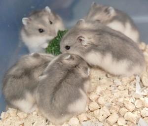 Северный олень: описание, поведение, питание, размножение