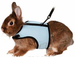 Как проводить лечение у кролика при обнаружении ушного клеща