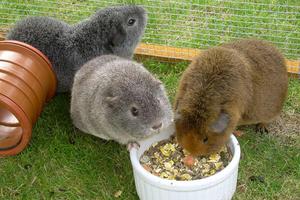Что едят кроты? Действительно ли они поедают урожай?