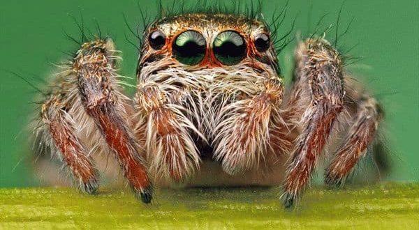 Приметы, связанные с увиденным таинственным пауком