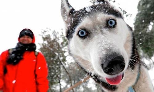 Активные породы собак