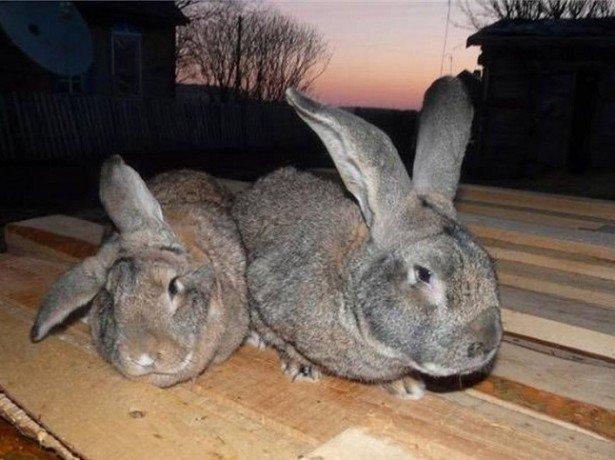 Чем болеют кролики, и как их лечить - советы