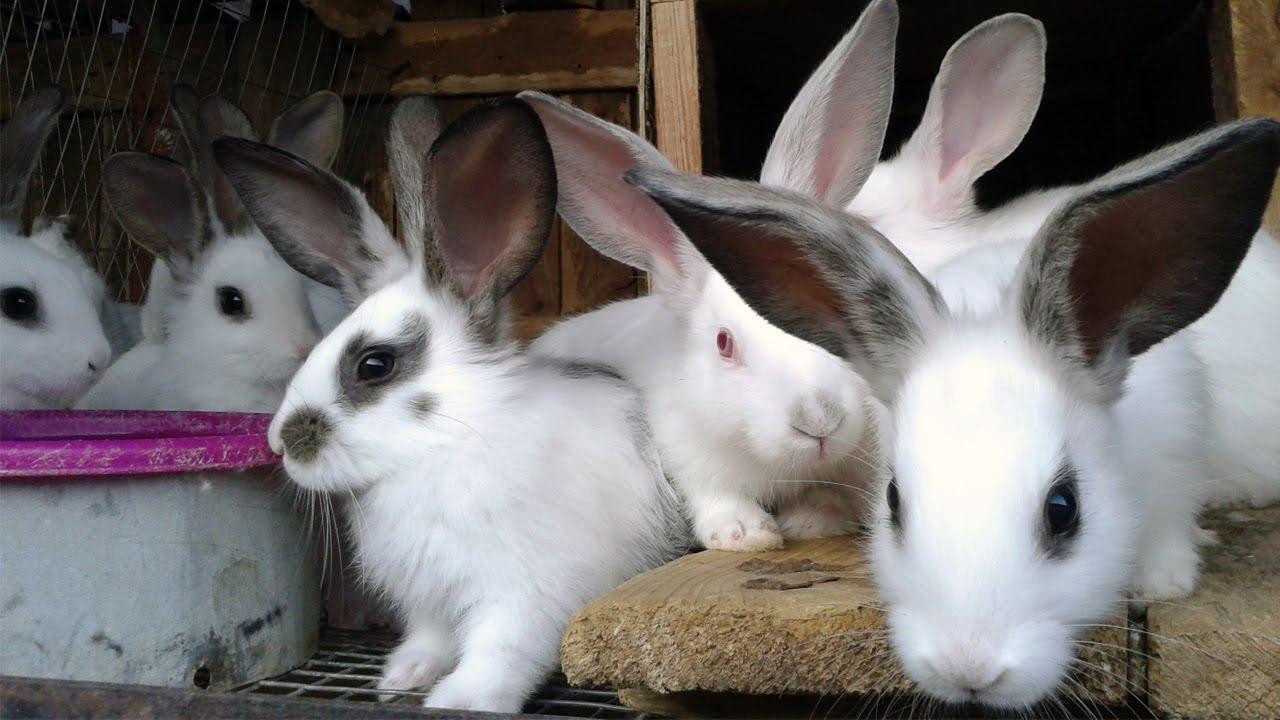 Чем болеют кролики, и как их лечить — советы