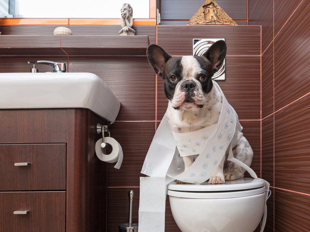 Что делать, если у собаки запор: лечение и меры профилактики