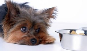 Что значит, если собака отказывается пить воду