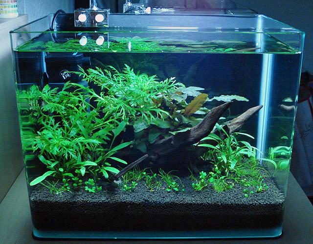 Грунт для аквариума — какой лучше выбрать
