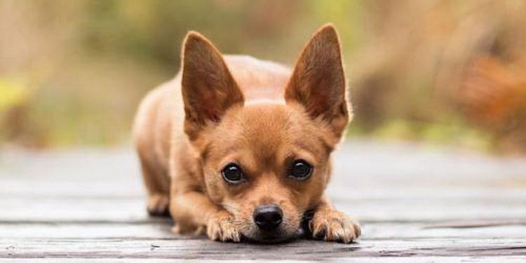 Интересно, сколько лет живут собаки?