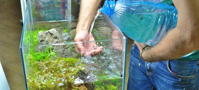 Как часто нужно менять воду в аквариуме