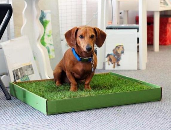 Как приучить щенка к пеленке: способы и советы владельцам
