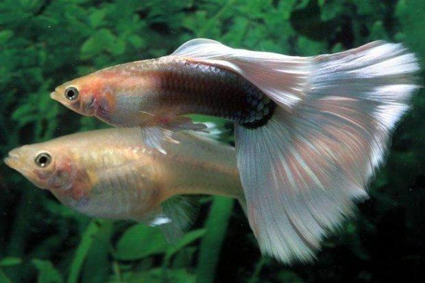 Правила и особенности процесса размножения рыбы. Как размножаются рыбы: особенности и способы