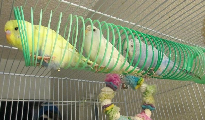 Как сделать своими руками игрушку для попугая
