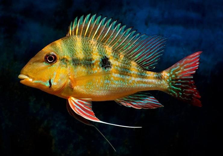 Как спят рыбы в воде: особенности строения органов зрения