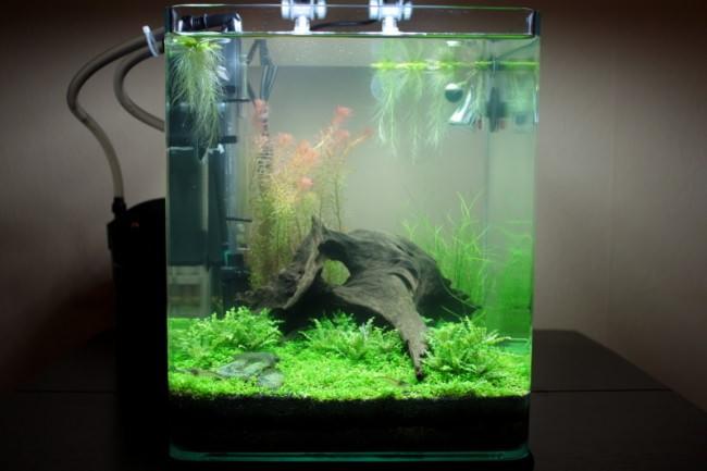 Как установить фильтр в домашний аквариум