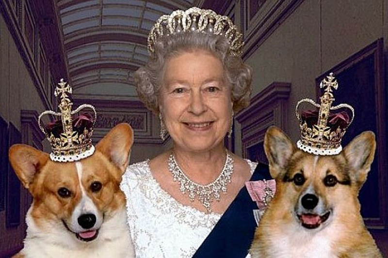Какая порода собаки любимая у королевы Елизаветы?