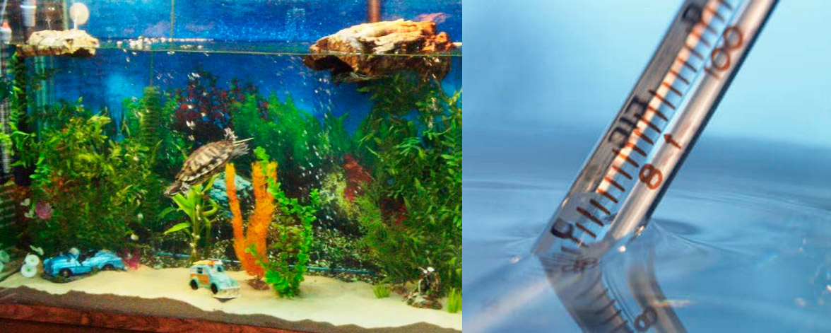 Какая температуры воды должна быть в домашнем аквариуме