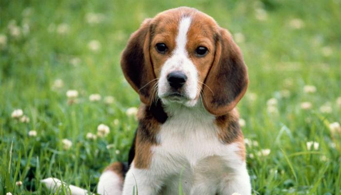 Какие успокоительные средства эффективны для собак?