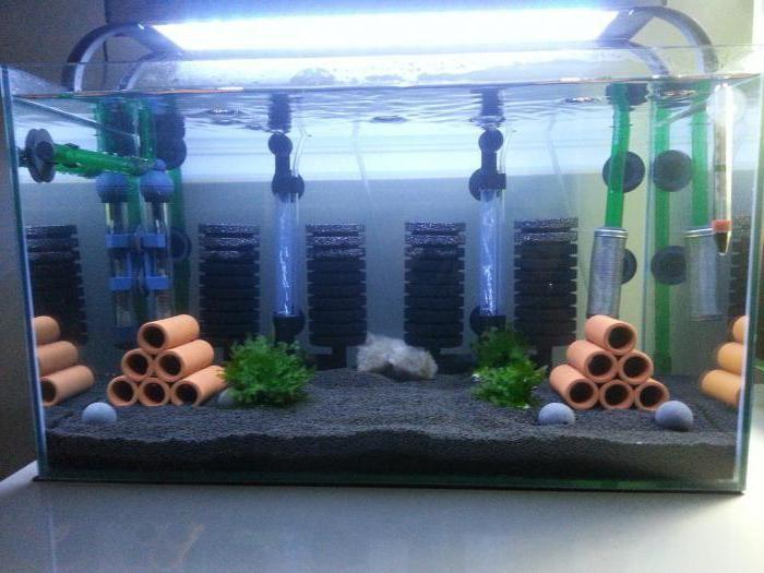 Какой тип фильтра лучше для аквариума