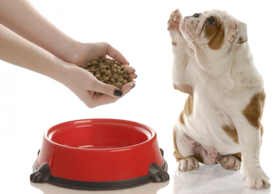 Можно ли кормить щенков сухим кормом