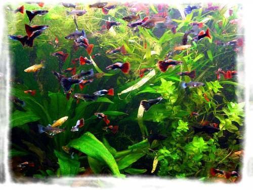 Неприхотливые растения в аквариуме для рыбок
