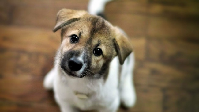 Нужны ли прикольные клички для собак
