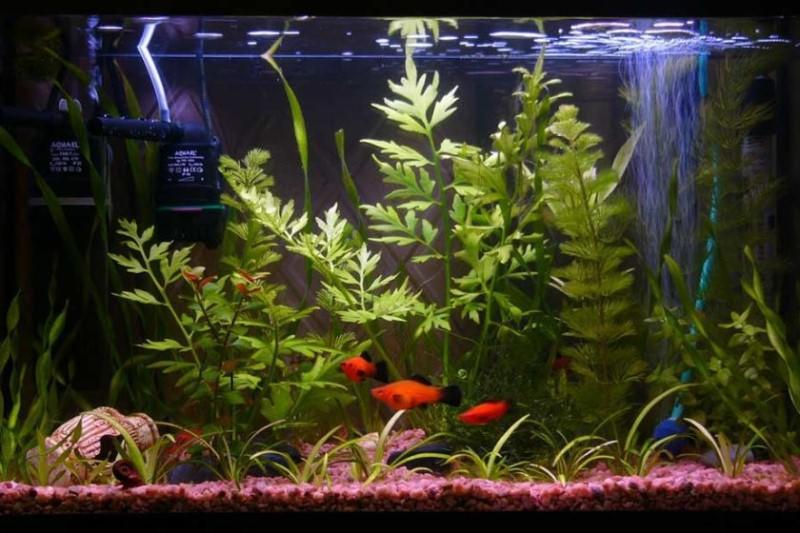 Оформление аквариума для рыбок своими руками