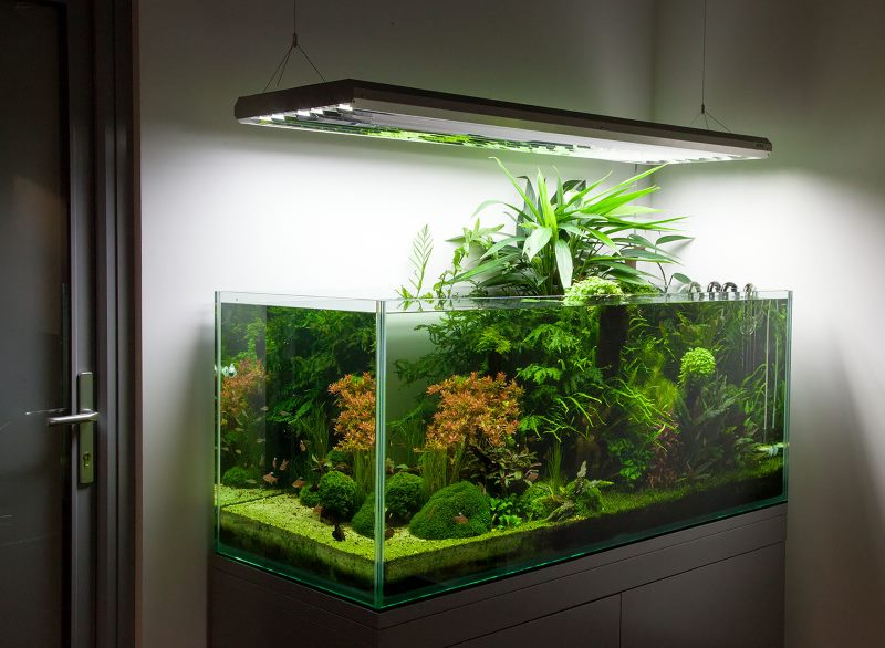 Особенности создания аквариума своими руками