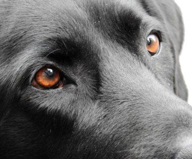 Почему у собаки текут глаза: основные причины и лечение