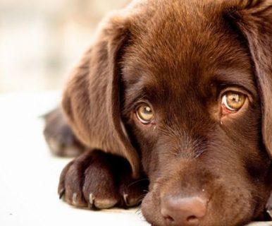 Почему у вашей собаки слезятся глаза