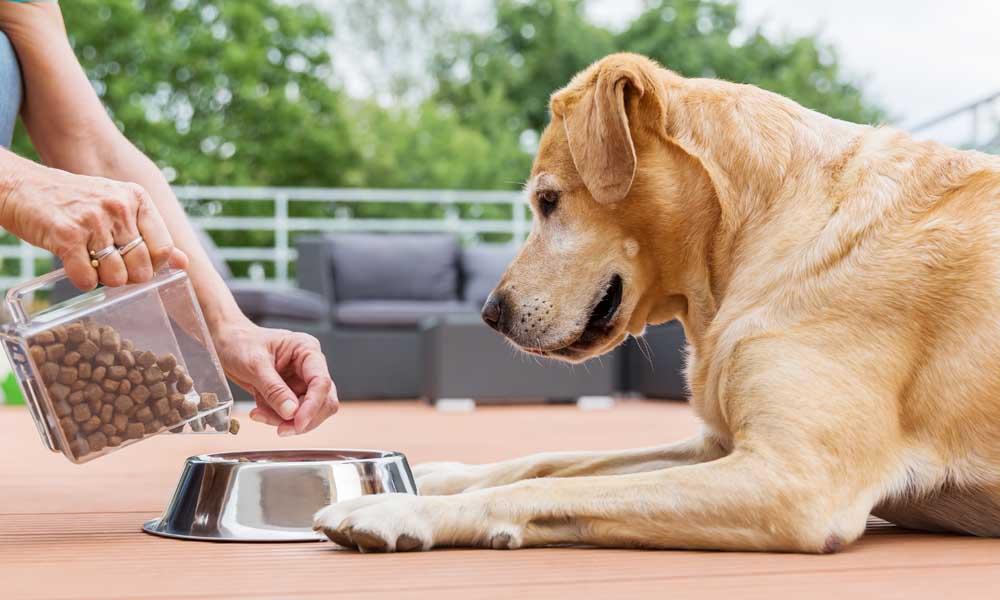 Профессиональный корм для собак: как выбрать и «с чем его едят»