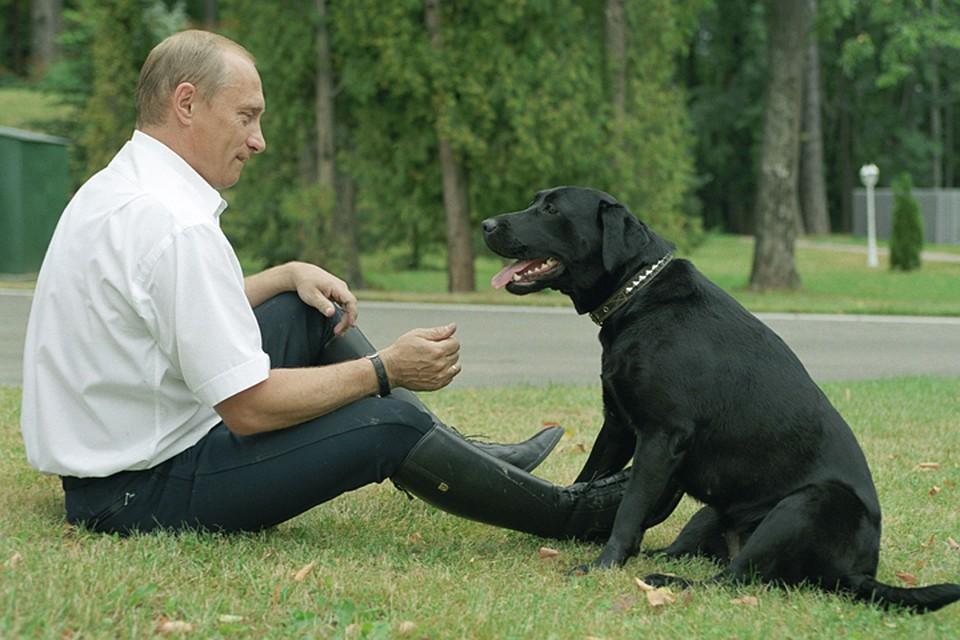 Путин: собака Конии и другие. Какое имя у нового любимца?