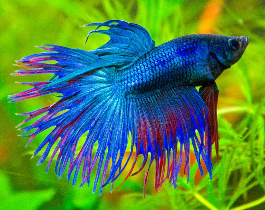 Рыбки для небольшого аквариума