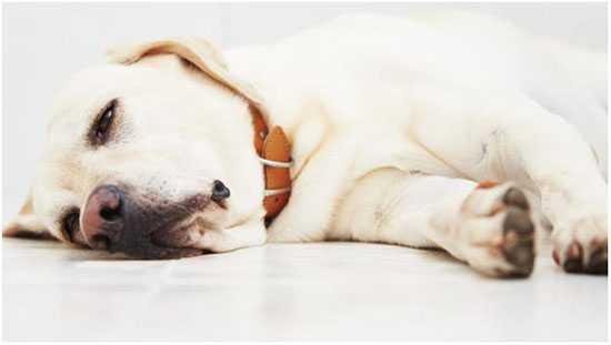 Собаку рвёт желчью: почему стоит задуматься о причине тошноты