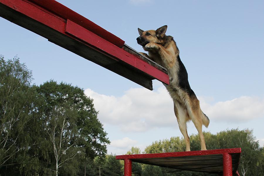 Центры собаководства в России