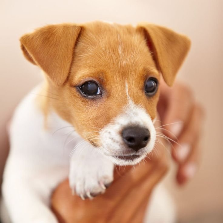 Выбор клички для собак-девочек